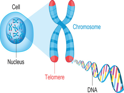 Are Telemore DNA Tests Reliable?